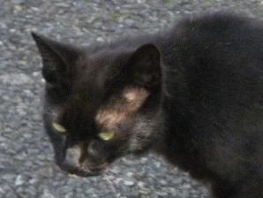 最初に撮影した猫.JPG